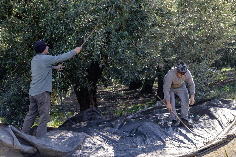 olives (1 of 1)-2