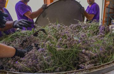 (small) lavender
