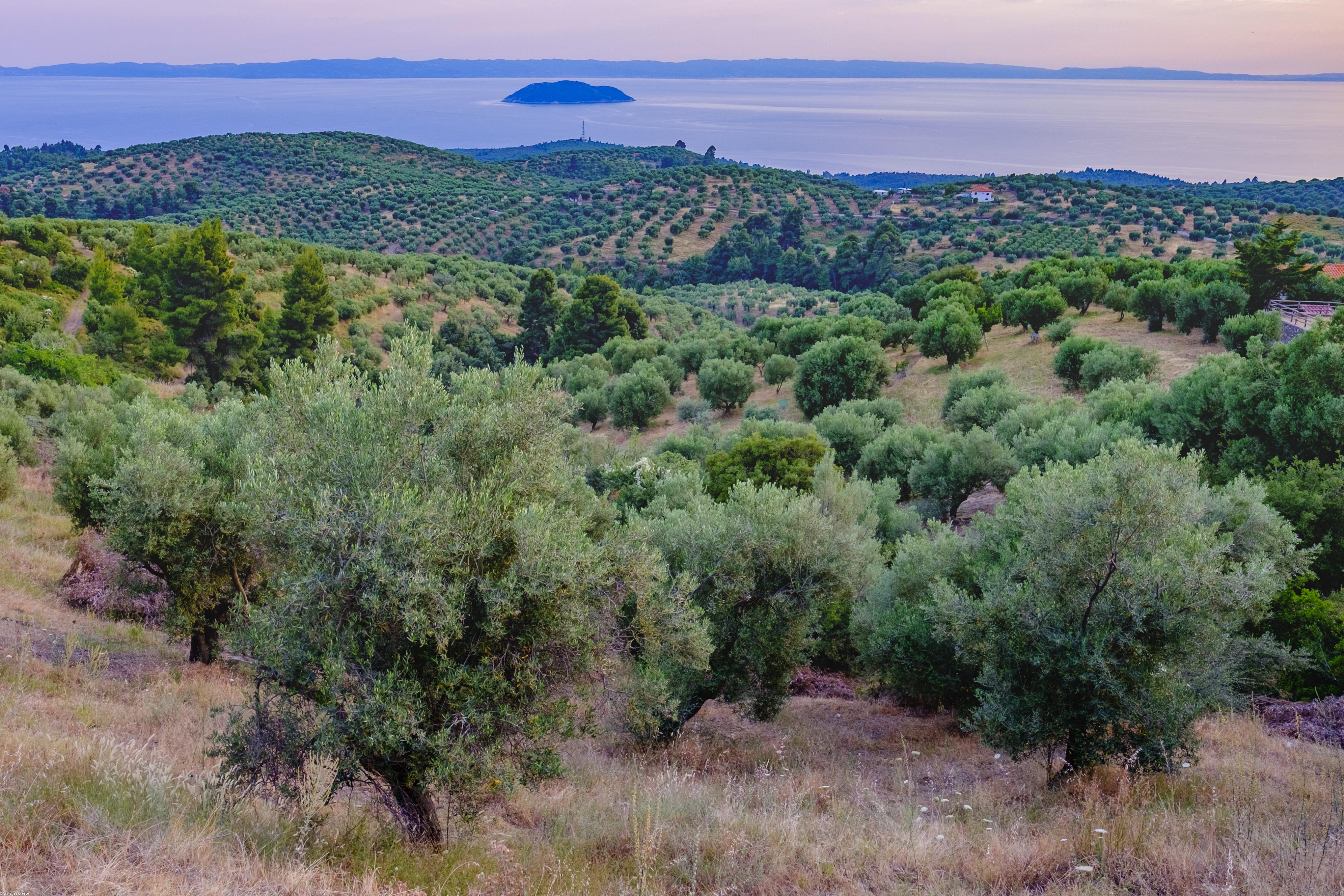 (small)landscape